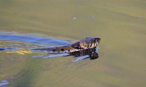 Serpientes marinas; Tipos y Características