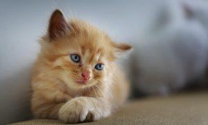 Panleucopenia felina; Tratamiento y Prevención