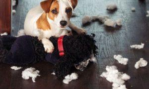 ¿Cómo hacer que mi cachorro deje de morder los muebles?
