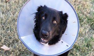 ¿Cómo escoger un buen veterinario para tu mascota?