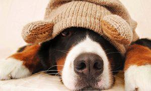 Cuidados con tu perro en época de frío