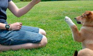 El entrenamiento de un perro, lo que debes tener en cuenta
