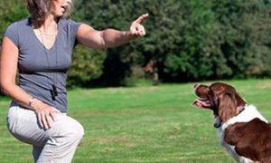 Los mejores consejos para entrenar a tu perro