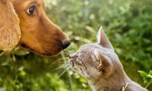 Nutrición natural para perros y gatos
