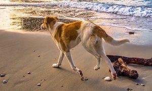 Cuidados con tu perro en verano