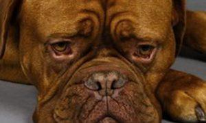 Estrés en las mascotas, de qué forma puedes prevenirlo