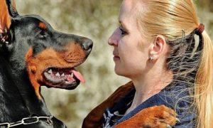 Entrenamiento y socialización de un perro guardián