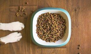 ¿Cómo cambiar la comida de mi perro paso a paso?