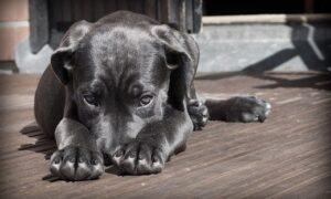 ¿Cómo jugar con tu perro en casa?