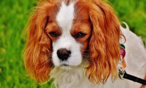 Los perros tienen los mismos problemas durante la pubertad que nosotros