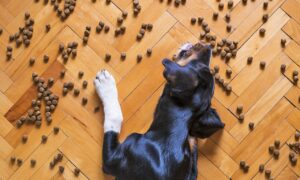 Vómitos en el perro: causas, peligros y tratamiento