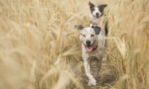 Hongos cutáneos en perros