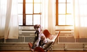 Por qué tu estrés está enfermando a tu perro