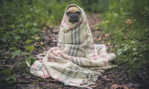 Fiebre en perros: causas, signos y opciones de tratamiento
