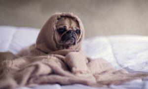 Mi perro tiene osteoartritis: ¿Qué debo hacer?