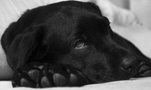 El resfriado común en los perros: ¿cómo tratarlo eficazmente?